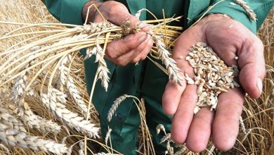 Photo of Украина экспортировала более 27 миллионов тонн зерновых культур