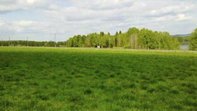 Photo of Заявки на покупку земельных участков
