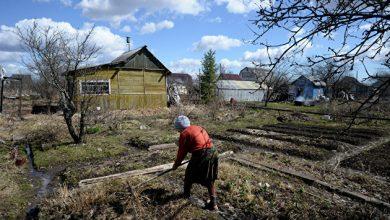 Photo of Грядки на садовых участках россиян начали постепенно вытеснять газоны