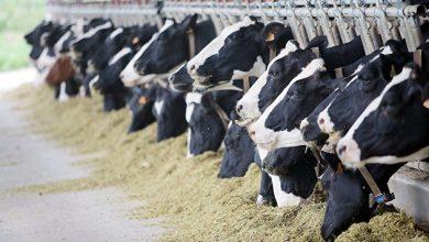 Photo of Путин развеял слухи о введении налога на скот