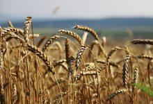 Photo of «Русская аграрная компания» выходит на рынок